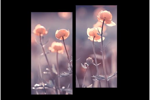 Модульная картина Луговые цветы